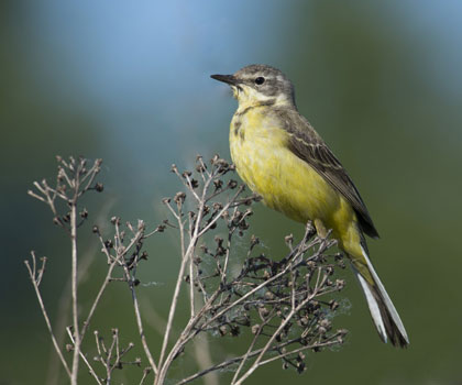 Международный день птиц